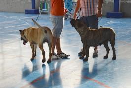 Valsequillo acogió la II Muestra Monográfica Canina