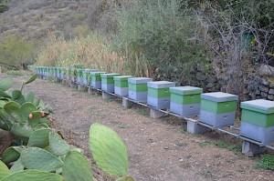 explotacion miel de malpedrosillo 31-10 (37) w