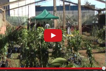 Campaña de entrega de árboles frutales en Valsequillo
