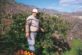 El Ayuntamiento de Valsequillo facilita la compra de árboles frutales