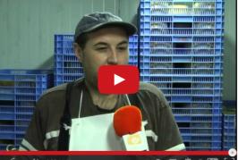 Premios a quesos y caracoles en las fiestas de San Sebastián de Agüimes.