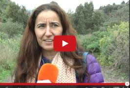 IX Encuentro por la integración de personas con discapacidad en Valsequillo.