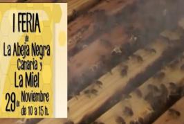 Video promocional de la I Feria del la Abeja Negra Canaria y la Miel en Valsequillo.