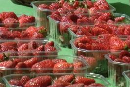 Video Promocional del V Día de la Fresa en Valsequillo