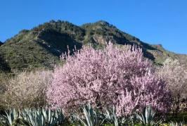 Valsequillo proyecta recuperar paisajes plantando más de 7.400 árboles en terrenos en desuso