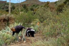 Valsequillo continúa con la limpieza y mantenimiento de sus senderos