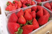 Valsequillo rinde tributo a sus fresas el 5 de mayo