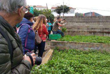 Concluyen las visitas guiadas previstas a los cultivos de las berreras de Firgas