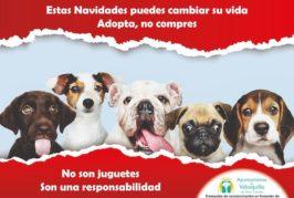 Valsequillo promueve la adopción de mascotas estas Navidades