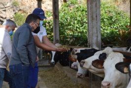 Valsequillo usa la inseminación artificial para aumentar su ganadería