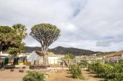 Visita institucional al Drago de Luis Verde en Valsequillo